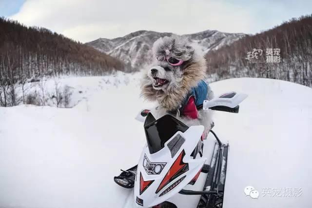 LDG资讯︱冻住了