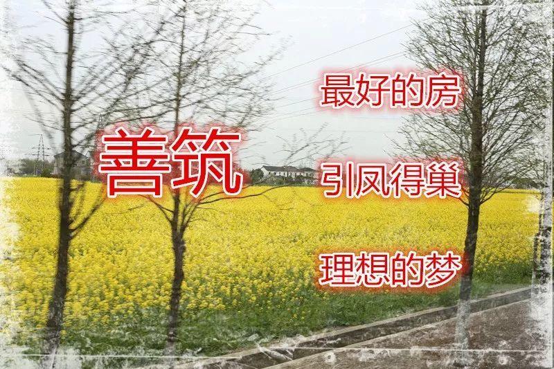 "LDG党建︱""红情绿意正当行""——太仓万丰村考察交流活动"