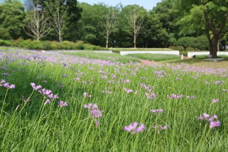 LDG动态|夏日里的小清新--蓝紫色的花卉